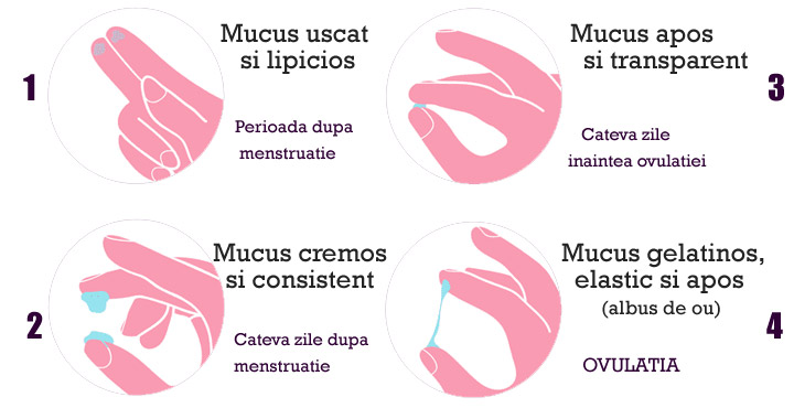 Mucusul cervical – cum determini perioada fertila