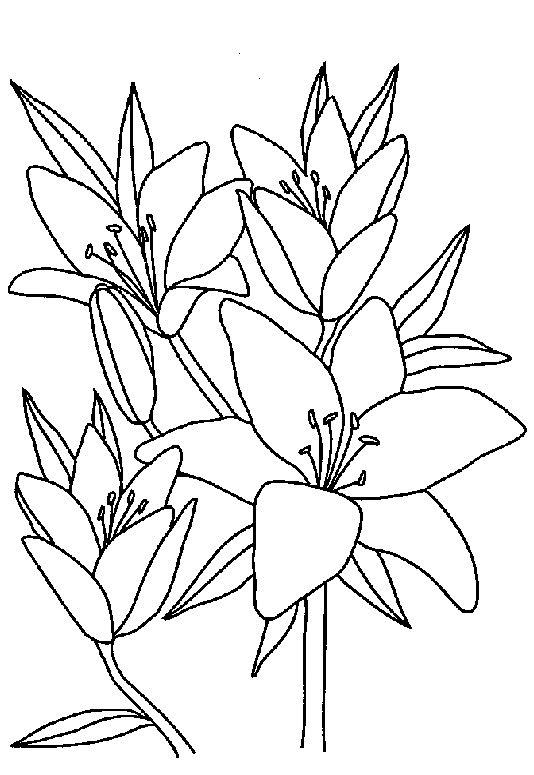 Orhidee Exotice Plansa De Colorat Sfatulmamicilorro