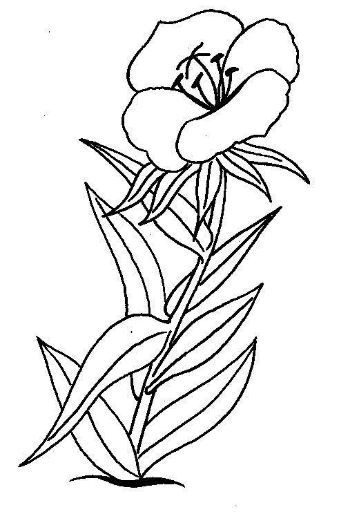 O Floare De Vara Plansa De Colorat Sfatulmamicilorro