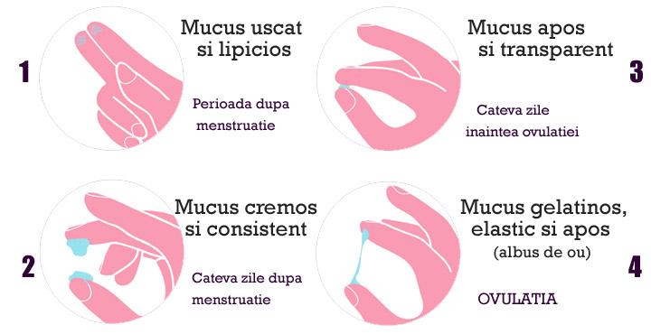 cum să pierdeți greutatea ovulației)
