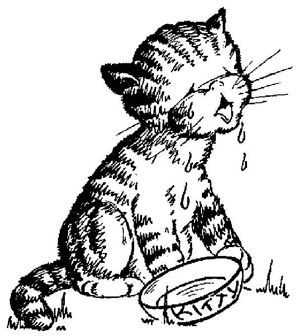Pisica Bea Lapte Plansa De Colorat Sfatulmamicilorro