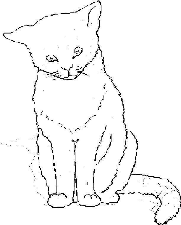 Planse De Colorat Cu Pisici Sfatulmamicilorro