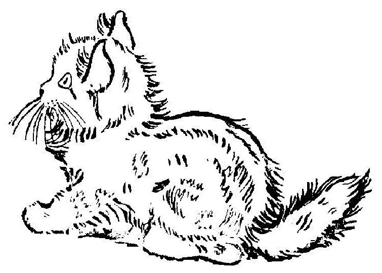 Puiut De Pisica Plansa De Colorat Sfatulmamicilor Ro