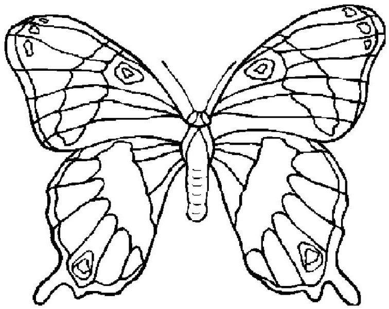 Fluturi De Colorat Planse Desene Sfatulmamicilorro