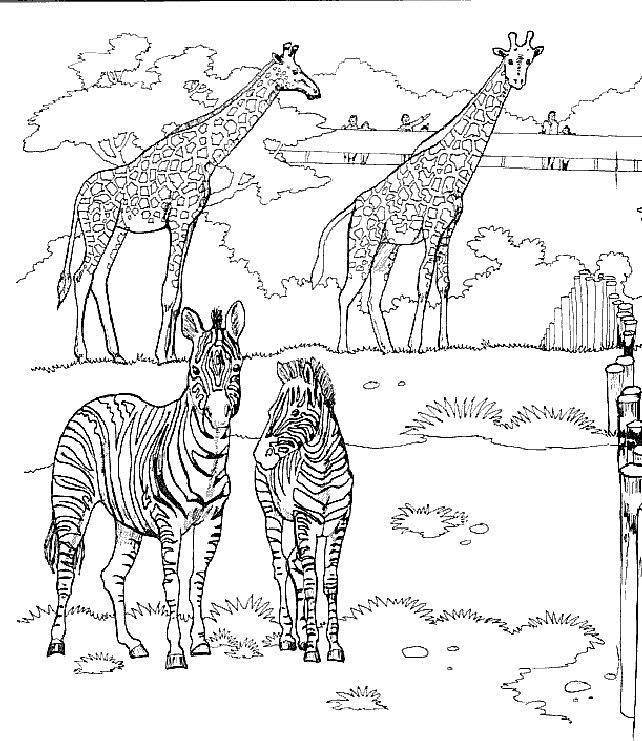 Planse De Colorat Cu Girafe Sfatulmamicilorro
