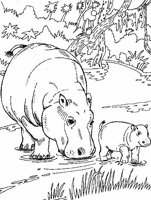 Hipopotam In Jungla Plansa De Colorat Sfatulmamicilorro