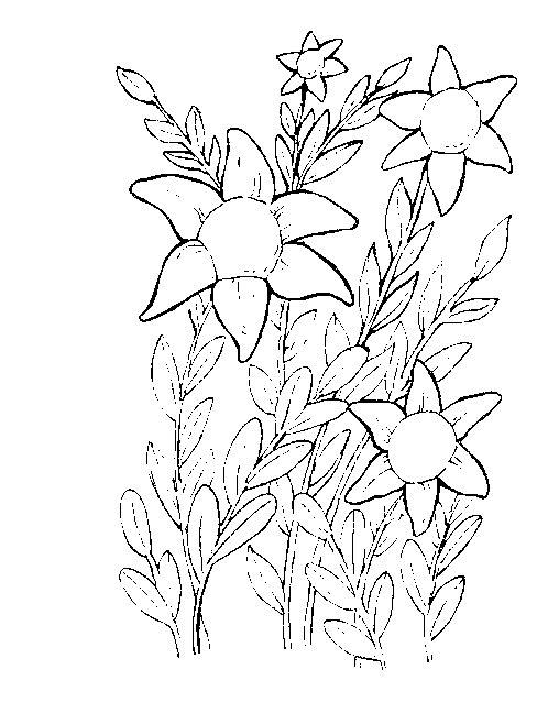 Flori Salbatice De Camp Plansa De Colorat Sfatulmamicilorro